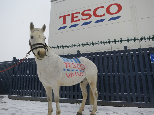 Tesco-Value-Horse-Meat-Not-Trusted-by-Brits-650x487